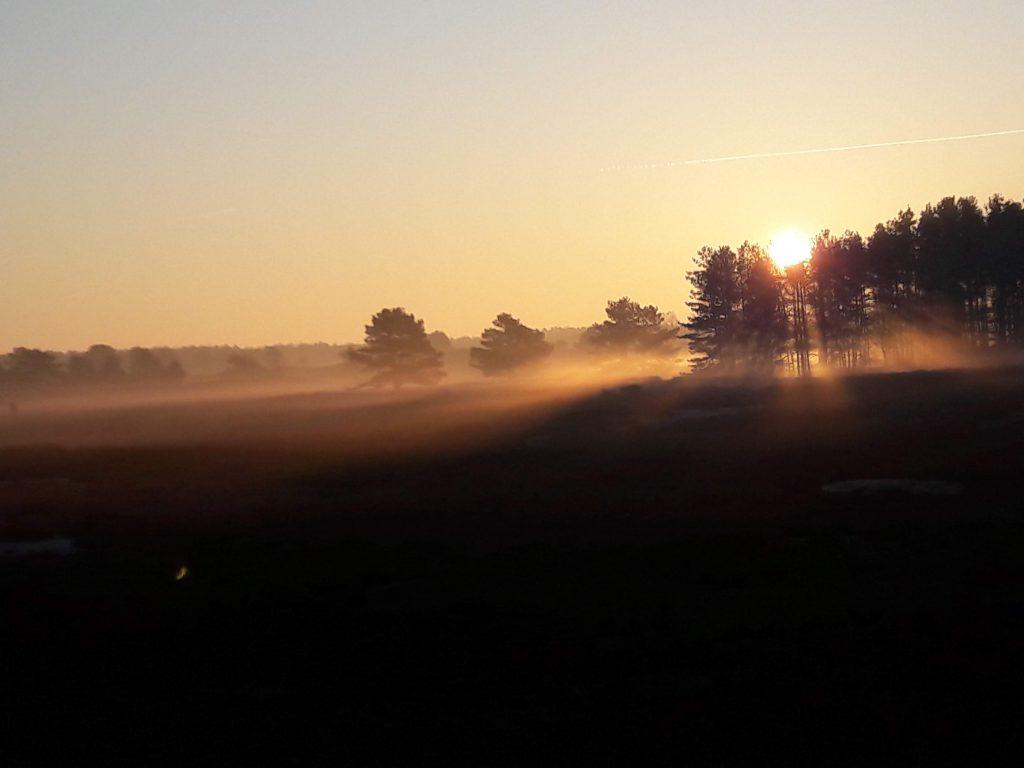 Die Nemitzer Heide im Nebel